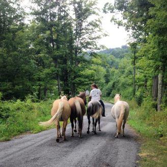 Sam and horses