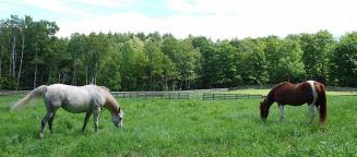 horses-in-pasture-1